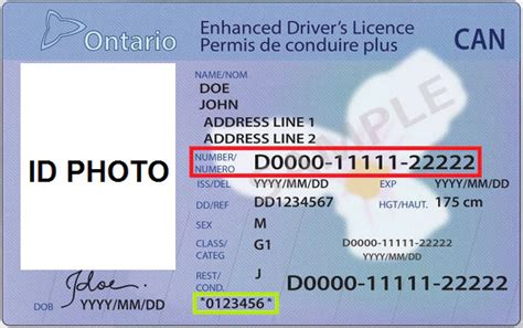 Document Number On Drivers License