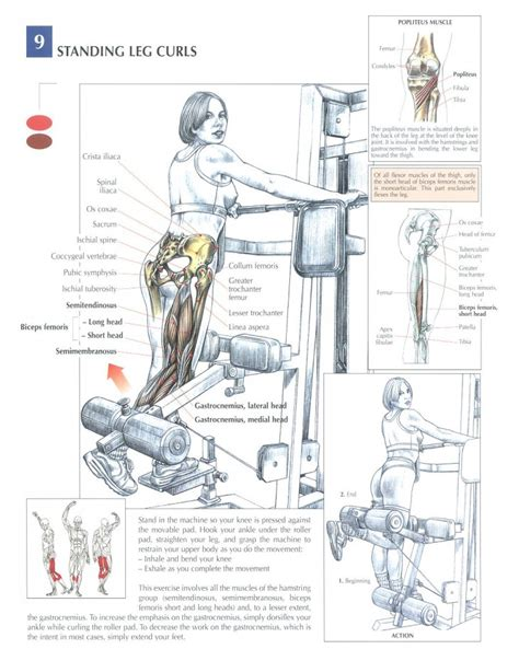 leg extension a casa curl femoral de pie ejercicios en casa