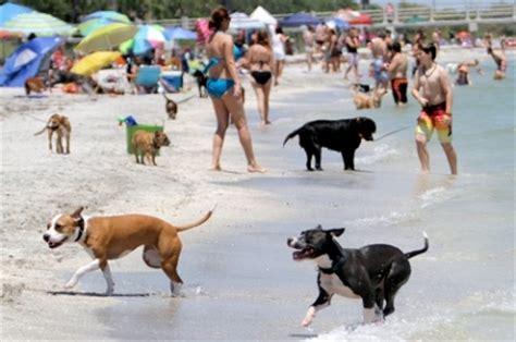 florida beaches that allow dogs 9 friendly beaches in florida visit florida