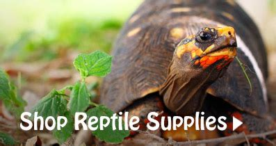 gecko gurl   reptile feeders supplying canada with quality