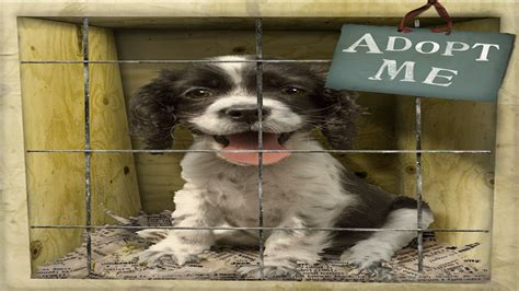 local adoption local animal shelters puppies animal shelter dogs adoption homes mexzhouse