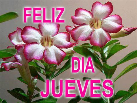 imagenes de feliz jueves con rosas rojas pictures images feliz d 237 a jueves con flores imagenes y carteles