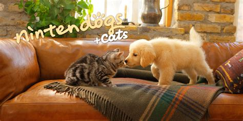 golden retriever nintendogs nintendogs cats golden retriever ses nouveaux amis nintendo 3ds jeux nintendo