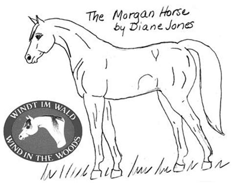 morgan horse coloring page morgan horse coloring pages morgan horse coloring pages