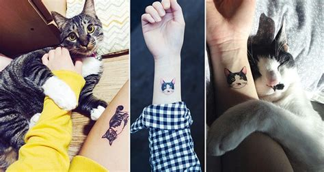 cat tattoo south korea cat tattoos are the new hottest trend in south korea