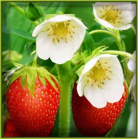 imagenes de flores y frutas fondos de pantalla de frutas y flores archivos imagenes