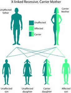 inheritance pattern of color blindness 3 11 mendelian inheritance in humans biology libretexts