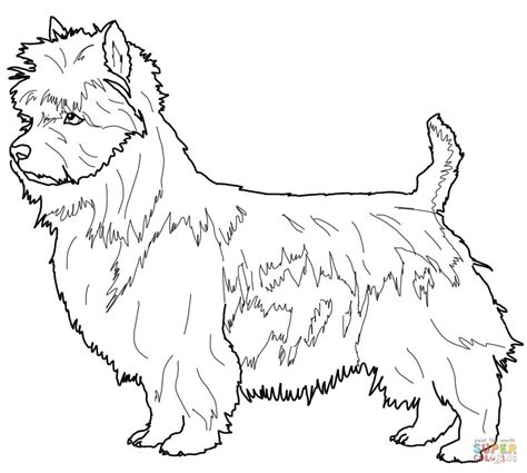 Australian Terrier Coloring Page Free Printable Coloring Terrier Coloring Pages