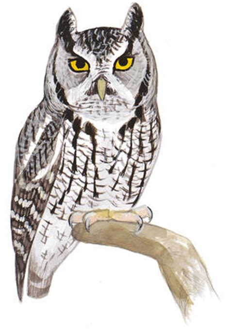 what would a screech owl want with a blind snake?   audubon