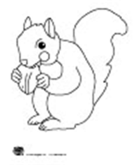 preschool squirrel coloring page squirrels fall and leaves preschool and kindergarten