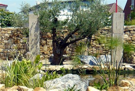 olivenbaum garten olivenb 228 ume tipps beispiele zur verwendung im garten