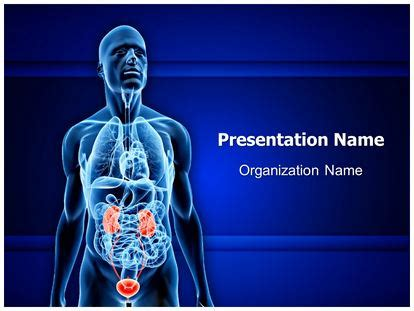 powerpoint templates urinary system urinary system powerpoint template background