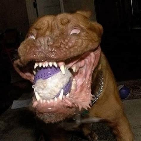 looking dogs top 6 scariest looking dogs