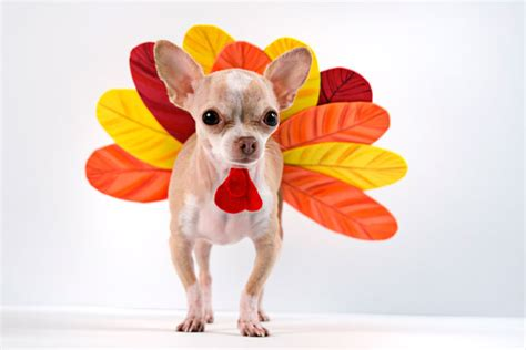 turkey dogs costumes food costumes for dogs delish