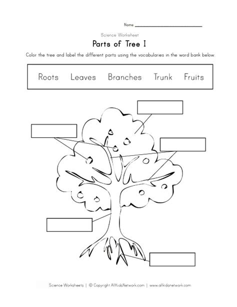 tree diagram coloring page parts of a tree worksheet