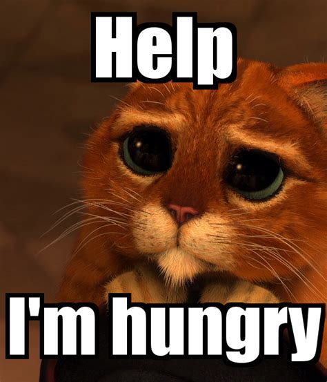 I M | im so hungry cat www imgkid com the image kid has it