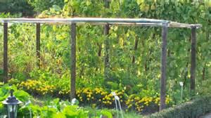 tomaten anpflanzen garten tomaten anbauen anleitung f 252 r erfolgreichen anbau