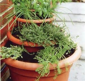 Bien Tomates Cerises En Jardiniere #7: Pots-en-cascade.jpg