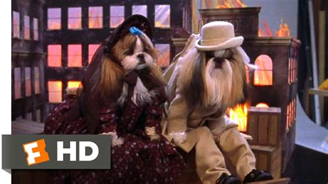 best in show shih tzu best in show 11 11 clip shih tzu calendar 2000 hd