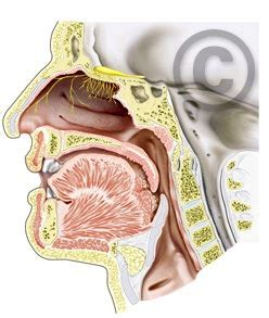 Nose Cross Section by Service