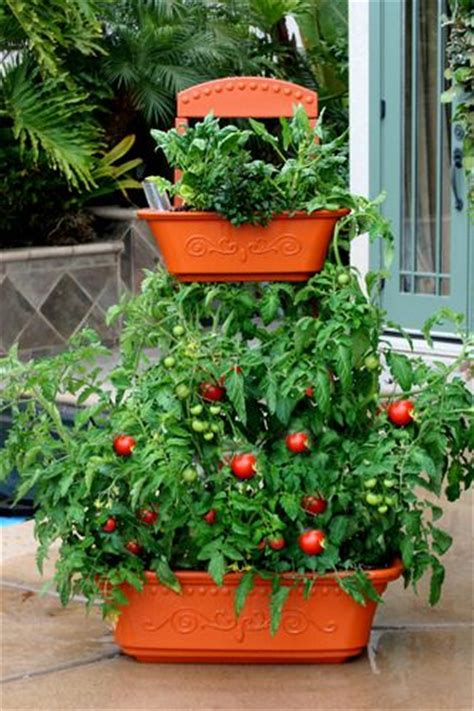 patio tiered planter ideal for container tomatoes with