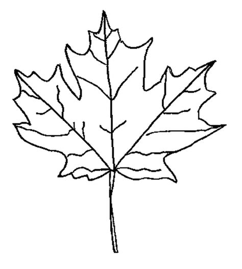 free coloring page maple leaf maple leaf outline clipart clipart suggest