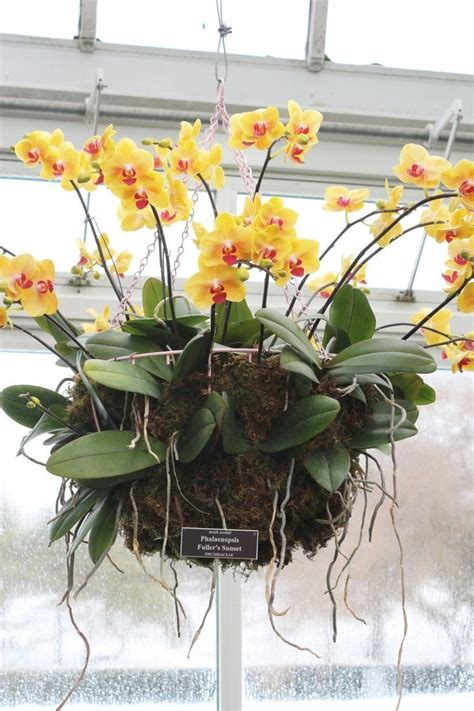 gardening 101 how to care for an orchid flower
