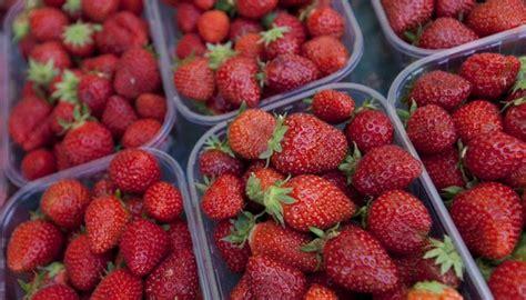 kinder elektroauto 3745 erdbeeren aus der schweiz sind bis zu 20 pestiziden ausgesetzt