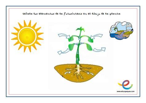 preguntas faciles sobre medio ambiente la fotos 237 ntesis una gu 237 a adaptada para ni 241 os de primaria