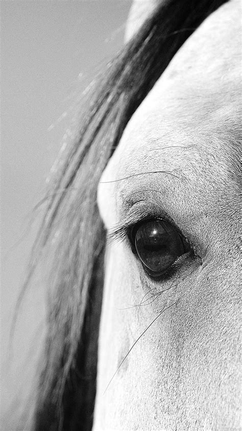wallpaper iphone 6 horse mb29 wallpaper eye of peace b horse papers co