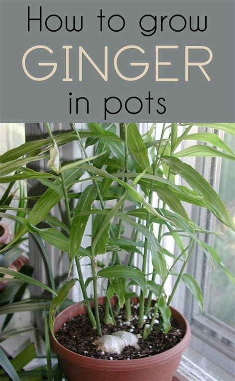 small plants to grow indoors 272 best images about gardens in containers on pinterest
