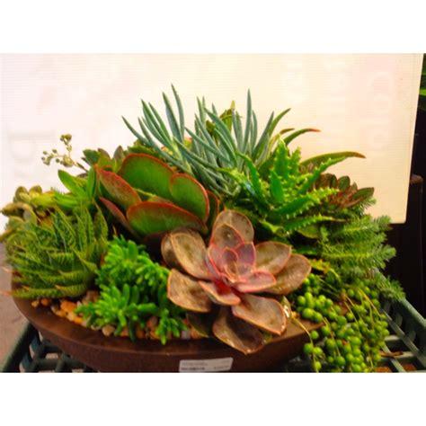 Images Of Dish Garden by Succulent Dish Garden Garden Gate