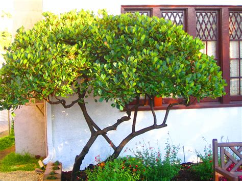 Small Backyard Trees by Narrow Small Trees Images