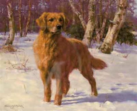 sally s golden retrievers as gold golden retriever print by paul doyle