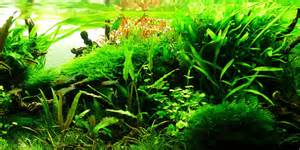 aquascape style understanding jungle aquascaping style the aquarium guide