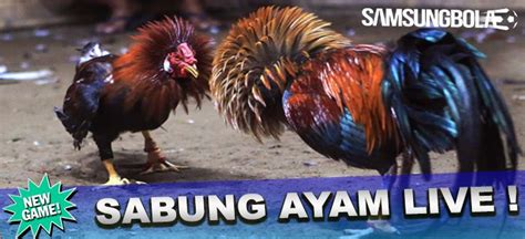 agen bola piala eropa  bandar casino sabung ayam uang asli bandar agen bangkok