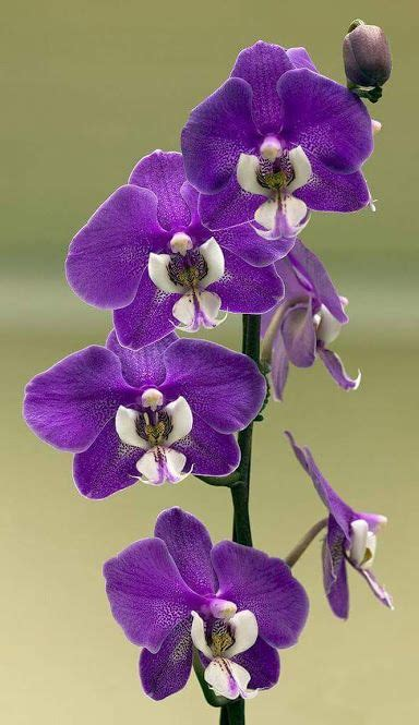 150 best orchid quotes images 587 best images about quotes orchids on phalaenopsis orchid orchid flowers and