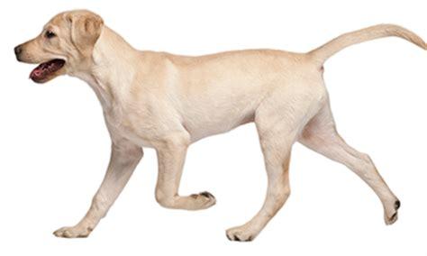 imagenes en png de animales hospital veterinario 24 hrs carsonhospital veterinario 24