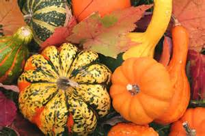 distinctively home fall decorating with gourds