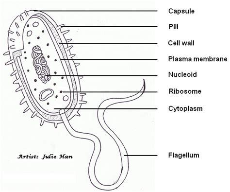 labelled diagram of e draw all ib biology syllabus