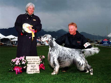 english setter dog show oakley english setters