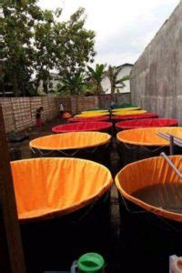 Jual Kolam Terpal Bandung jual kolam terpal karet lengkap rangka siap pakai agro