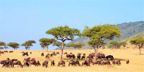 african safari south africa holidays safaris holidays in south africa