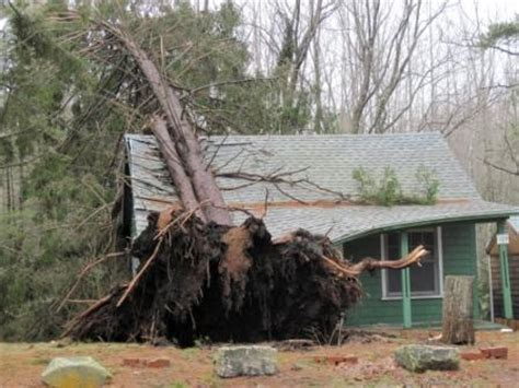 why do trees topple in a storm? scientific american blog