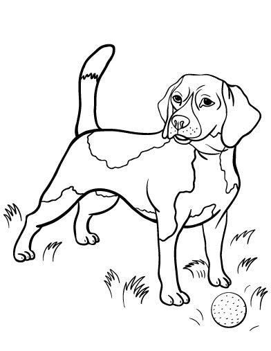 beagle dog coloring page 83 best v 228 rityskuvia koirat images on pinterest coloring