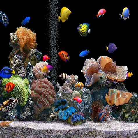Fish Live Wallpaper Mobile9 by Aquarium Hd 2048 X 2048 Wallpapers 3438744