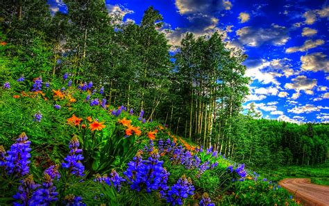 wallpaper abyss spring wildflowers in spring forest full hd wallpaper and