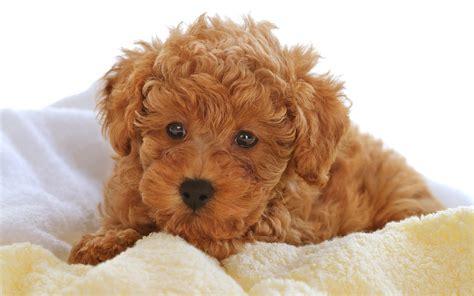 imagenes tiernas de perritos 20 wallpapers de perritos blogerin