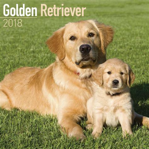 golden retrievers uk golden retriever calendar 2018 calendar club uk