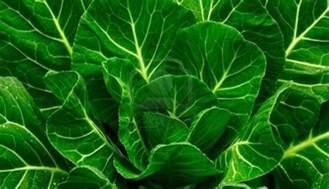 colored greens collard greens recipe dishmaps